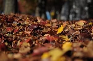 leaves-101329_640